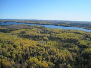 Photo: Ducks Unlimted has fostered several forestry partnerships to conserve wetlands. This image shows a wetland in the Boreal Region.